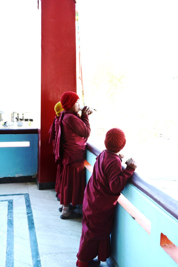 Mini monks with the shell